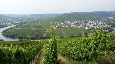 Moselschleife bij Trittenheim